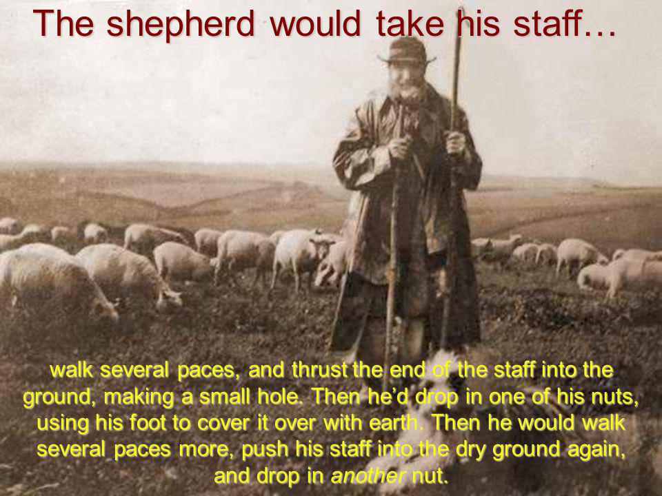 The next day, he took his sheep out grazing…