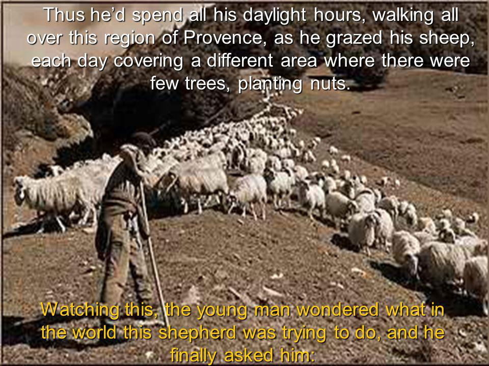 The shepherd would take his staff… walk several paces, and thrust the end of the staff into the ground, making a small hole.