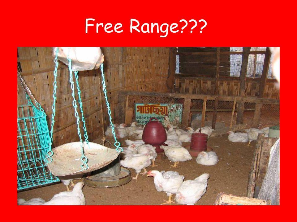 Free Range???
