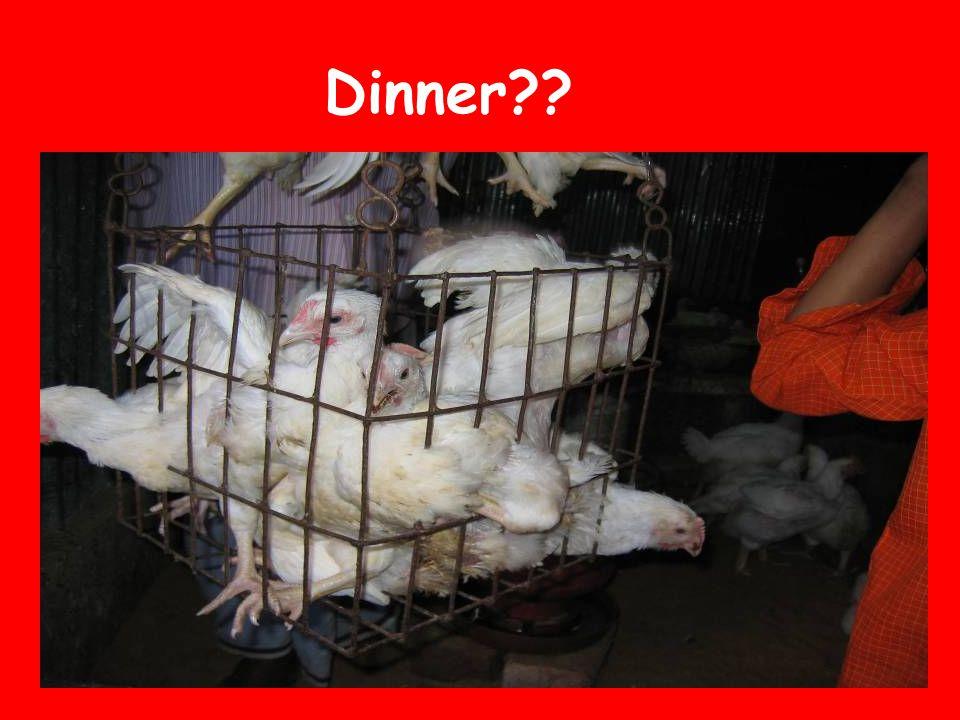 Dinner??
