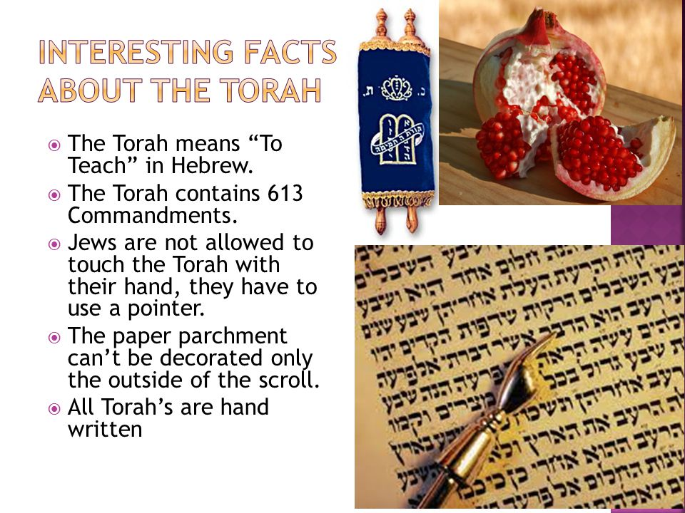 """ The Torah means """"To Teach"""" in Hebrew.  The Torah contains 613 Commandments.  Jews are not allowed to touch the Torah with their hand, they have to"""