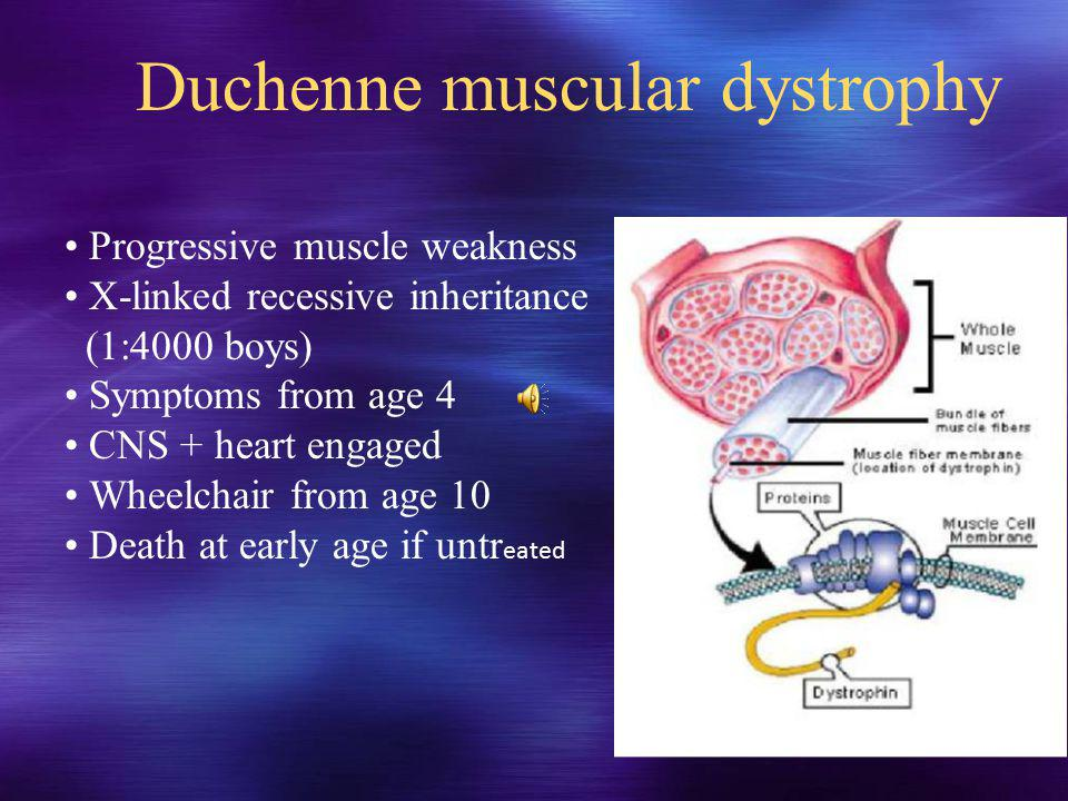 Duchenne muscular dystrophy Progressive muscle weakness X-linked recessive inheritance (1:4000 boys) Symptoms from age 4 CNS + heart engaged Wheelchair from age 10 Death at early age if untr eated