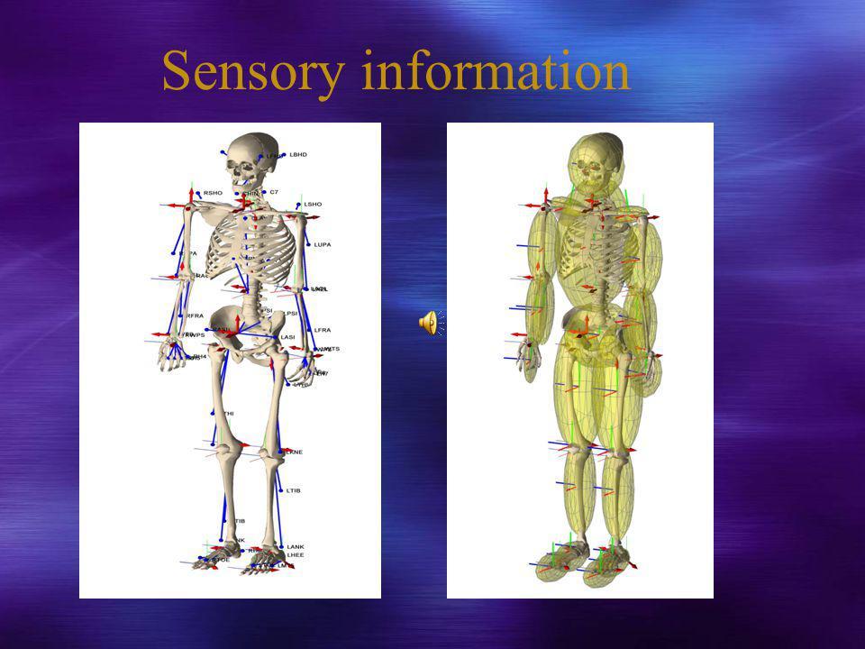Sensory information