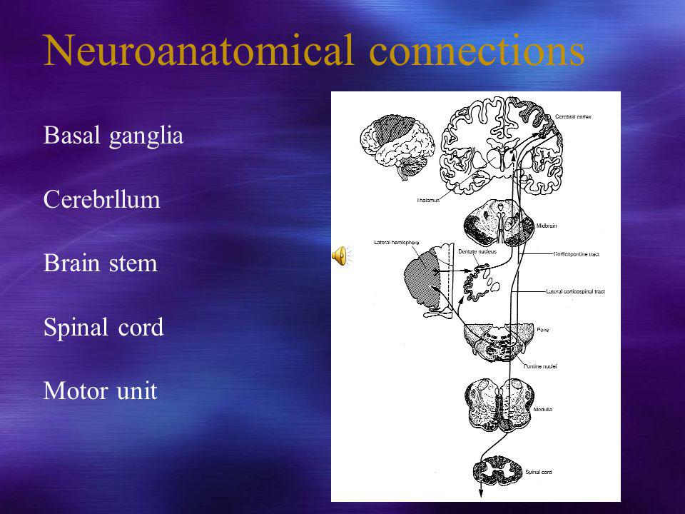 Neuroanatomical connections Basal ganglia Cerebrllum Brain stem Spinal cord Motor unit