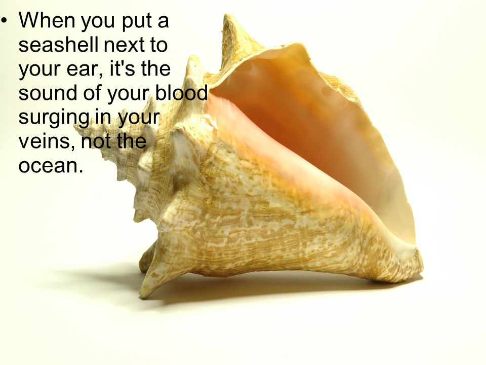 When you put a seashell next to your ear, it s the sound of your blood surging in your veins, not the ocean.