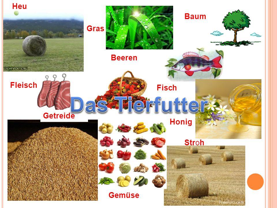 Fleisch Fisch Stroh Heu Baum Beeren Honig Gemüse Gras Getreide