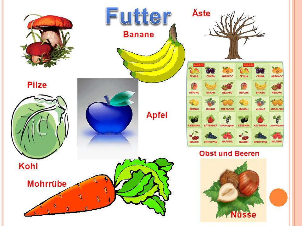 Pilze Banane Äste Kohl Apfel Nüsse Mohrrübe Obst und Beeren