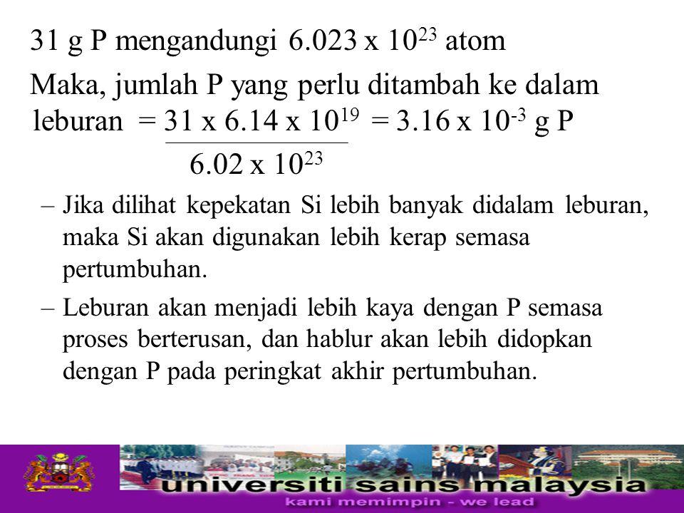 31 g P mengandungi 6.023 x 10 23 atom Maka, jumlah P yang perlu ditambah ke dalam leburan = 31 x 6.14 x 10 19 = 3.16 x 10 -3 g P 6.02 x 10 23 –Jika di