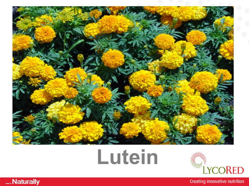 Creating Fantastic Food ….Naturally Lutein
