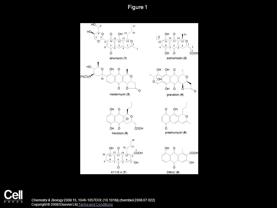 Figure 1 Chemistry & Biology 2008 15, 1046-1057DOI: (10.1016/j.chembiol.2008.07.022) Copyright © 2008 Elsevier Ltd Terms and Conditions Terms and Cond