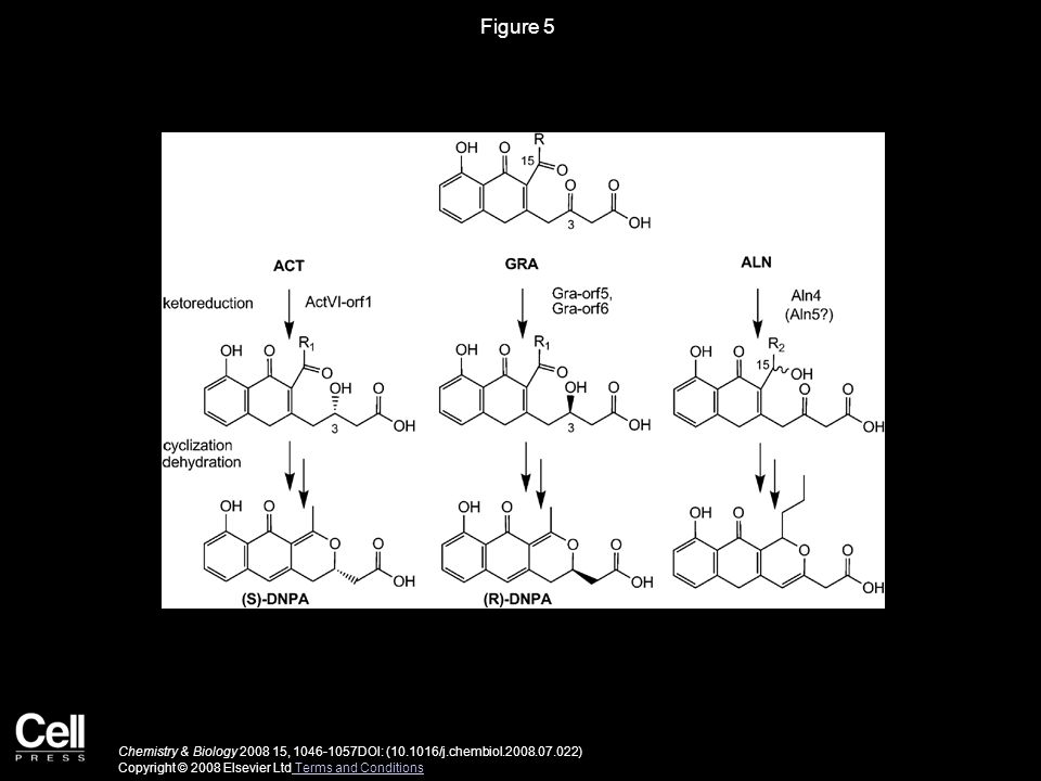 Figure 5 Chemistry & Biology 2008 15, 1046-1057DOI: (10.1016/j.chembiol.2008.07.022) Copyright © 2008 Elsevier Ltd Terms and Conditions Terms and Conditions