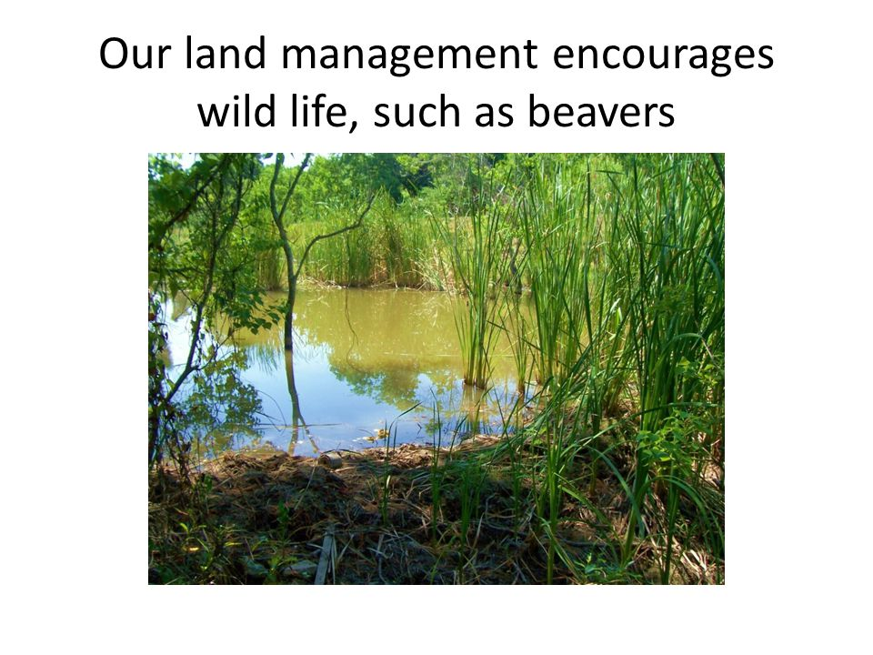 Our land management encourages wild life, such as beavers