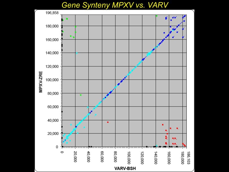 Gene Synteny MPXV vs. VARV