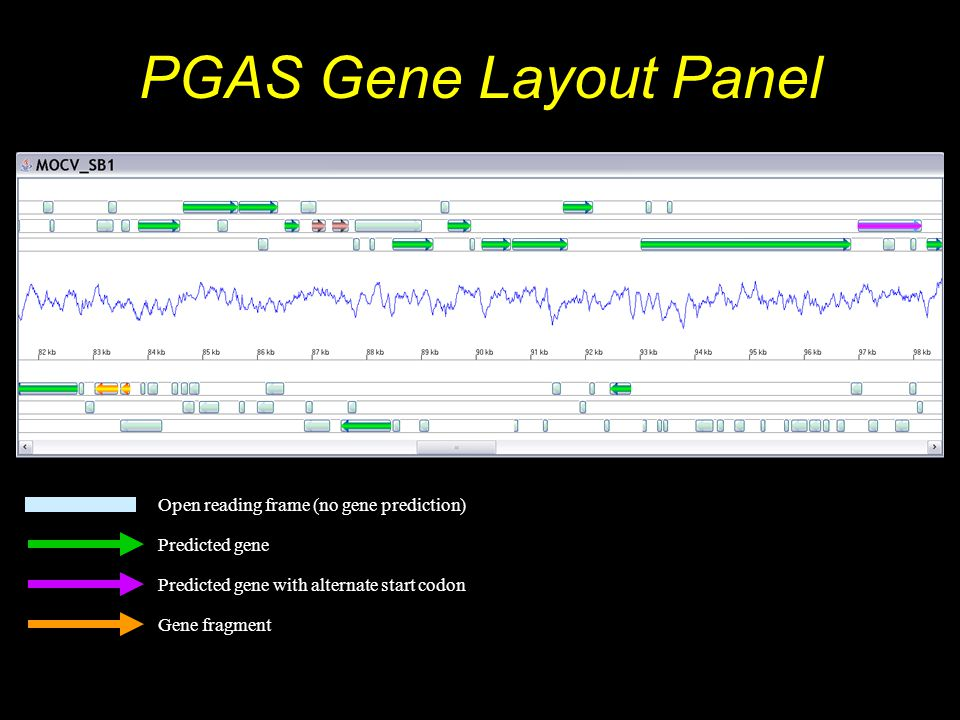 PGAS Gene Layout Panel Open reading frame (no gene prediction) Predicted gene Predicted gene with alternate start codon Gene fragment