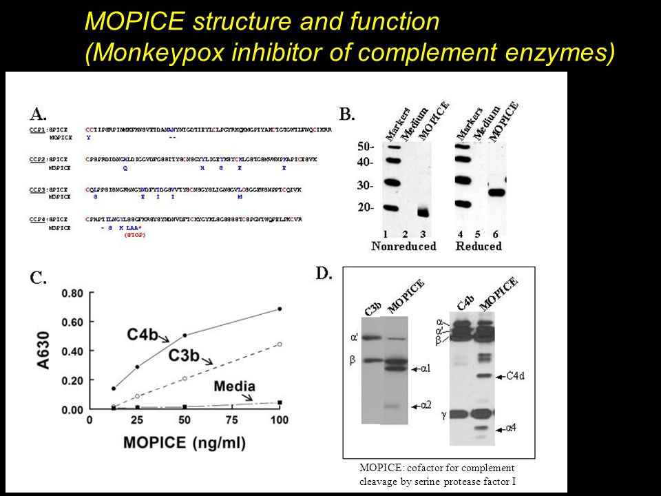 MOPICE structure and function (Monkeypox inhibitor of complement enzymes) MOPICE: cofactor for complement cleavage by serine protease factor I