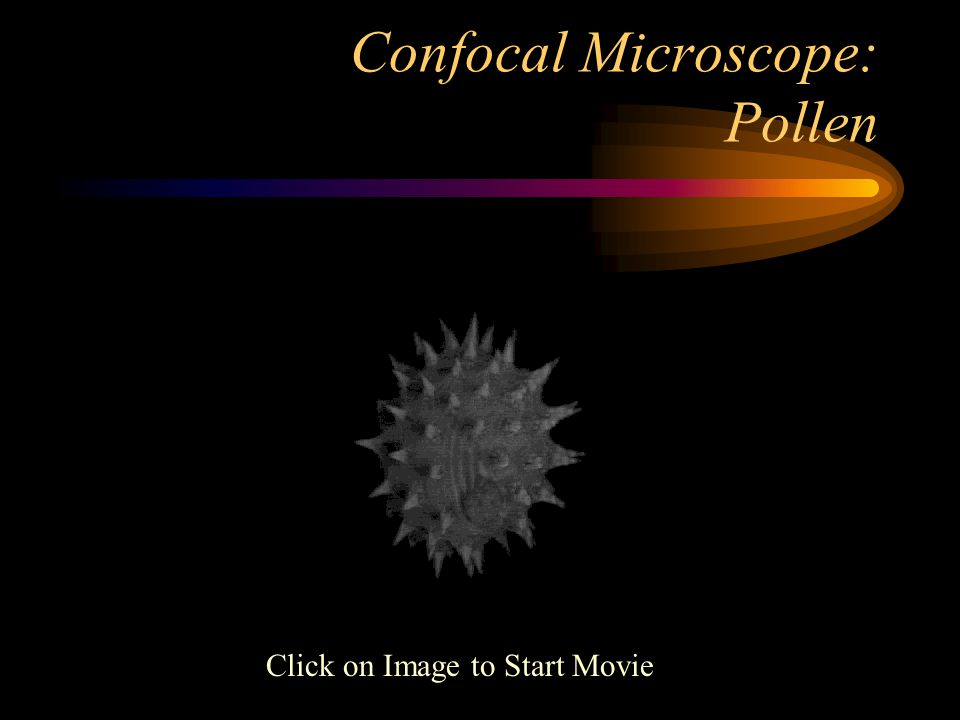Confocal Microscope: Pollen Click on Image to Start Movie