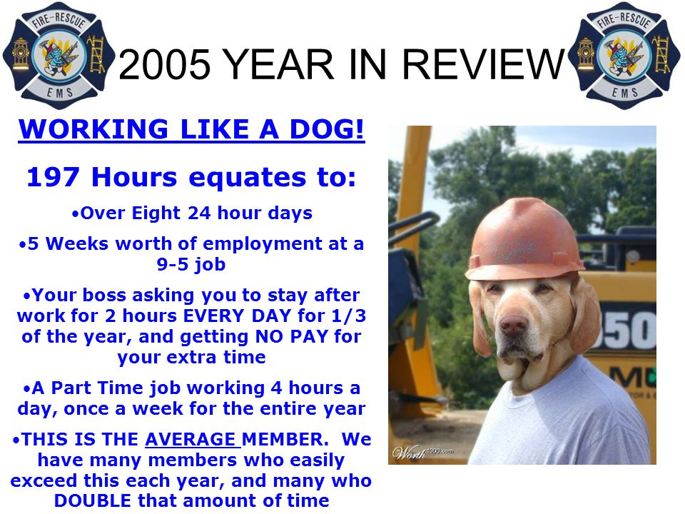 2005 YEAR IN REVIEW WORKING LIKE A DOG.