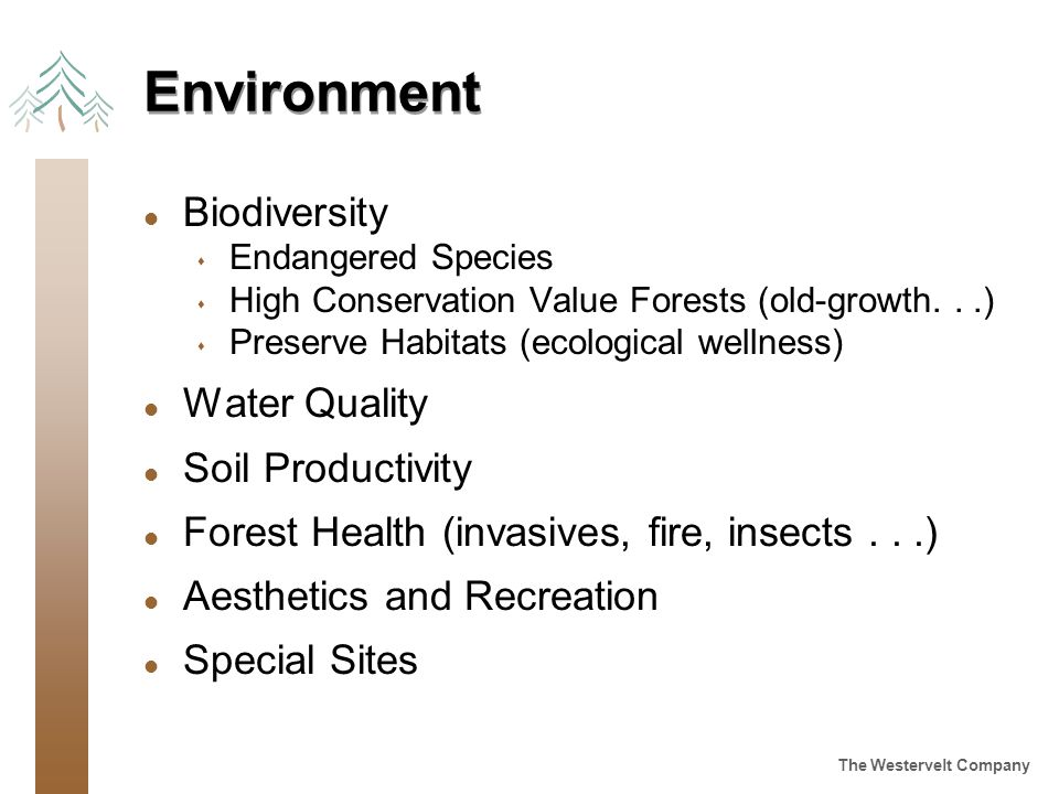 The Westervelt Company Environment l Biodiversity s Endangered Species s High Conservation Value Forests (old-growth...) s Preserve Habitats (ecological wellness) l Water Quality l Soil Productivity l Forest Health (invasives, fire, insects...) l Aesthetics and Recreation l Special Sites