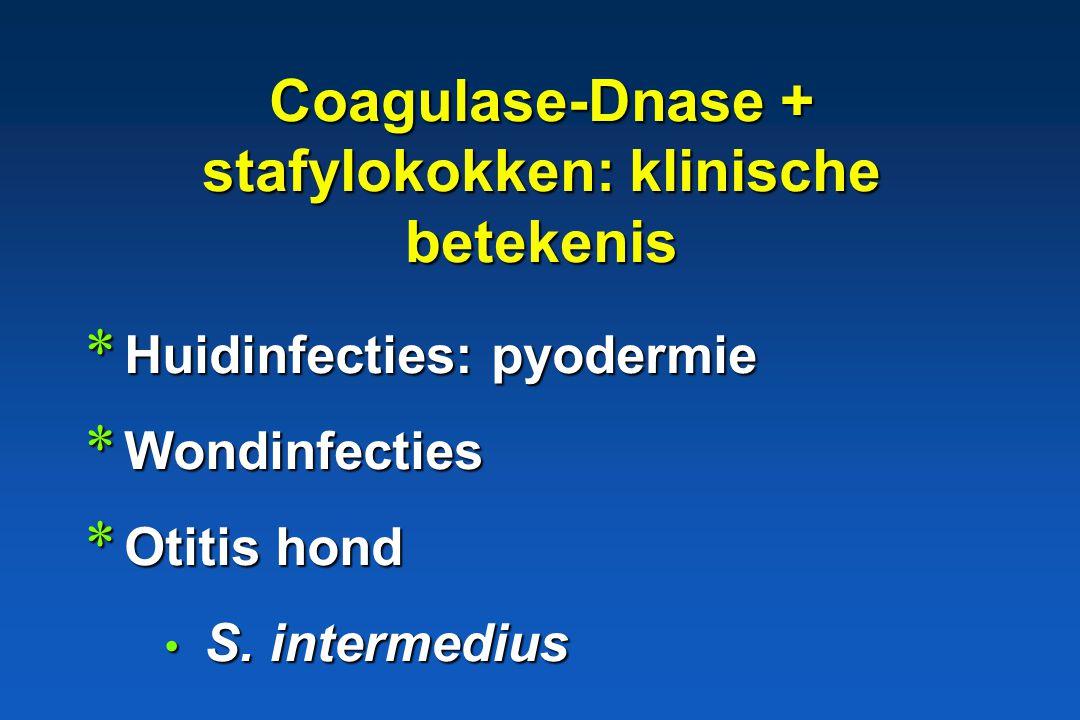 Botryomycosis