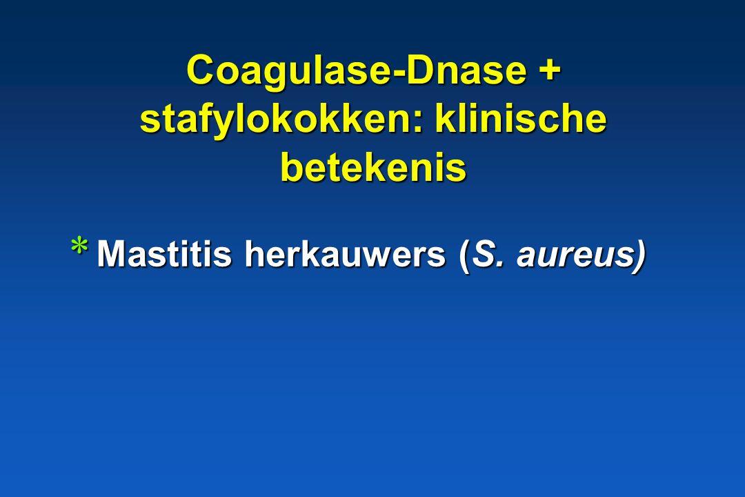 Coagulase-Dnase + stafylokokken: klinische betekenis * Huidinfecties: pyodermie * Wondinfecties * Otitis hond S. intermedius S. intermedius