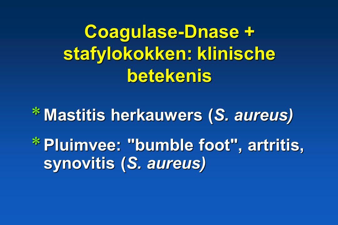 * Mastitis herkauwers (S. aureus) Coagulase-Dnase + stafylokokken: klinische betekenis