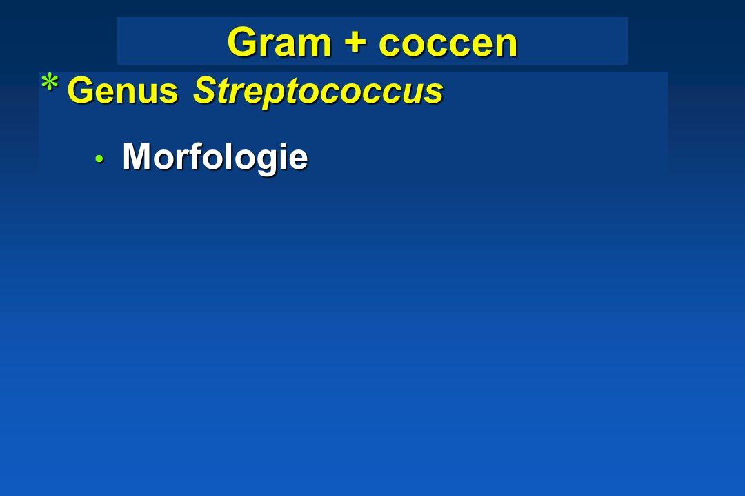 * Konijn: abcessen, conjunctivitis, pyaemie Coagulase-Dnase + stafylokokken: klinische betekenis