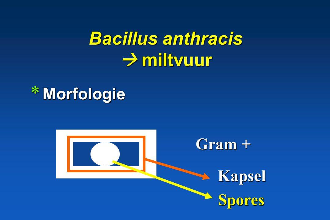 Gram + sporenvormende bacillen * Bacillus * Clostridium aëroob of fac. anaëroob anaëroob