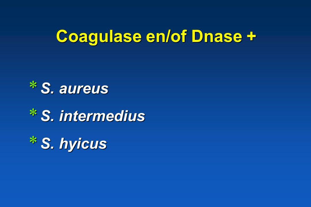 Staphylococcus * Indeling coagulase en/of DNase + coagulase en/of DNase + coagulase en/of DNase - coagulase en/of DNase -