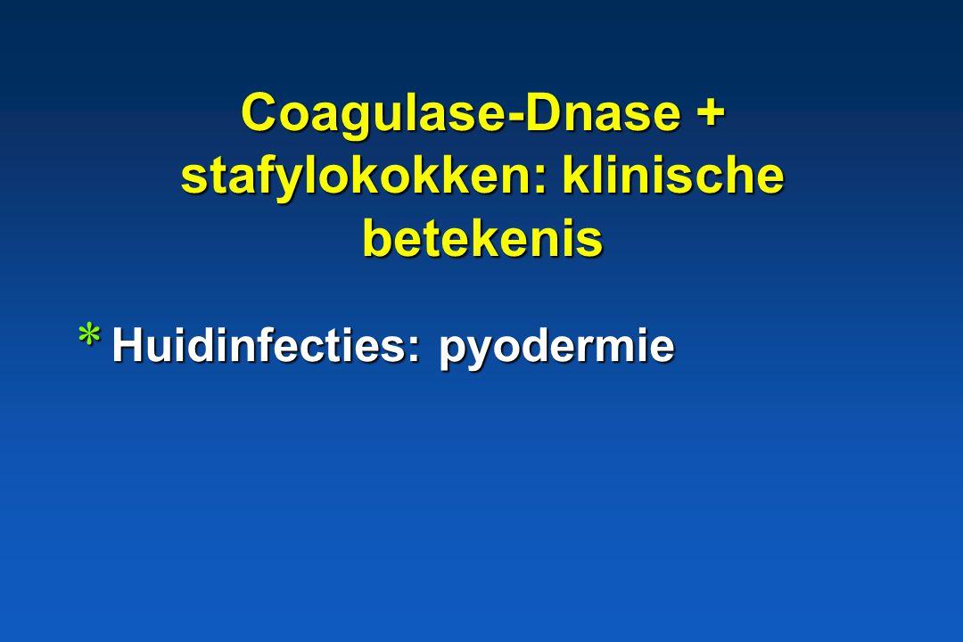 Coagulase en/of Dnase + * S. aureus * S. intermedius * S. hyicus