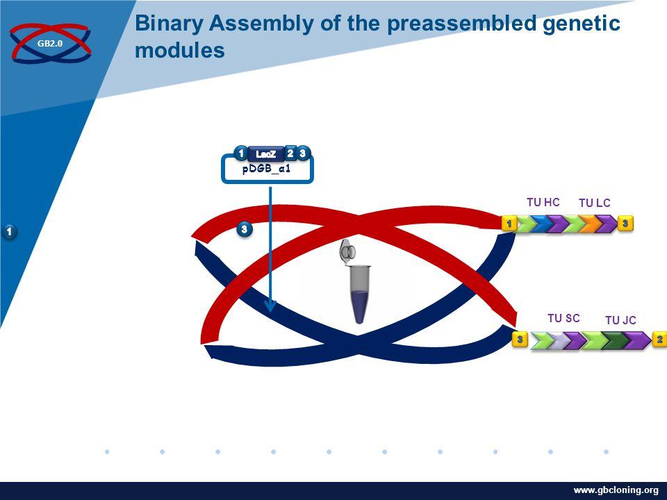 www.company.com www.gbcloning.org GB2.0 pDGB_α1 TU HC TU LC TU JC TU SC Binary Assembly of the preassembled genetic modules