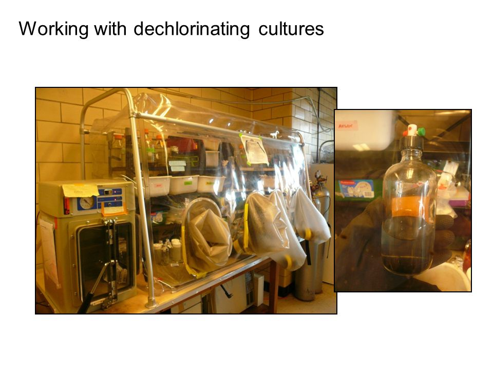Working with dechlorinating cultures