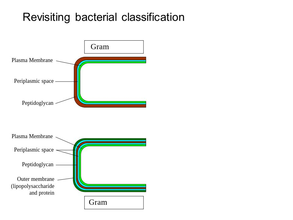 Revisiting bacterial classification
