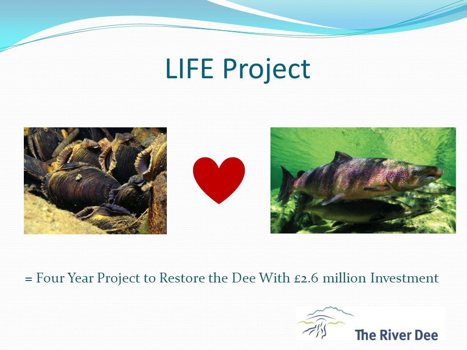 LIFE Project - Deliverables Upper Dee Riparian Scheme70 km of riverbank protected with the creation of 457 ha of new riparian woodland Diffuse Pollution45 km of buffer strips on the Dinnet, Tarland, Dess & Feugh Physical River Restoration8 sites throughout the catchment Dee in the Classroom40 schools