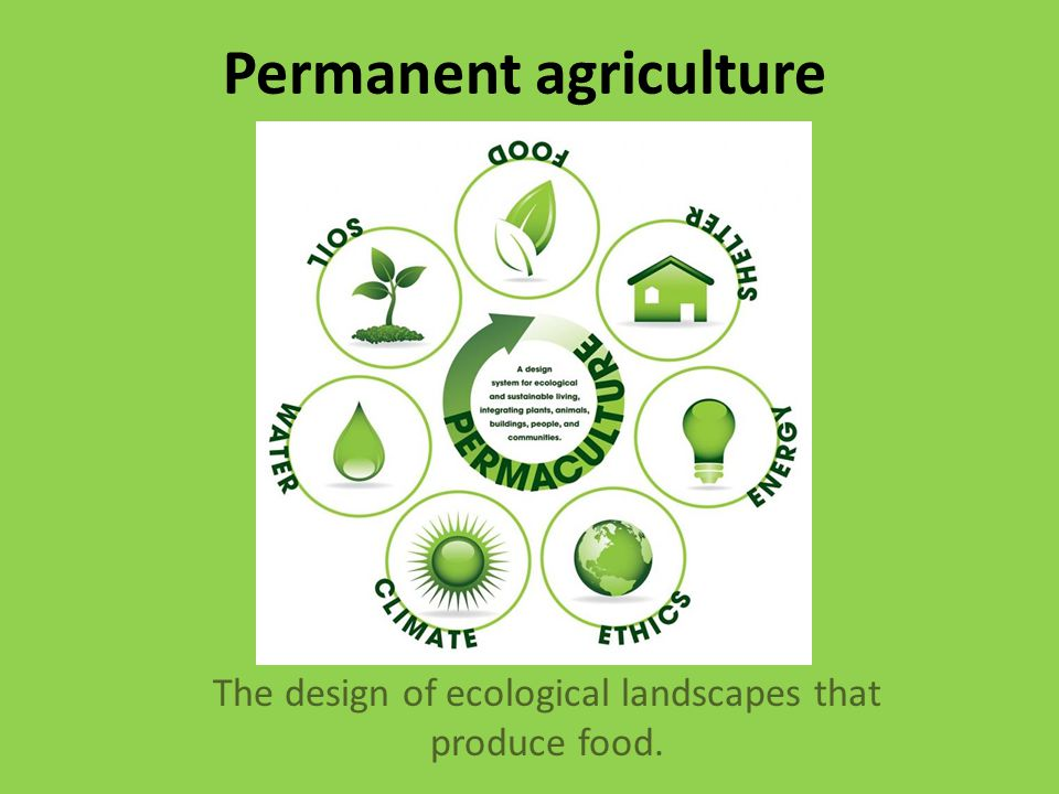 Permanent agriculture The design of ecological landscapes that produce food.