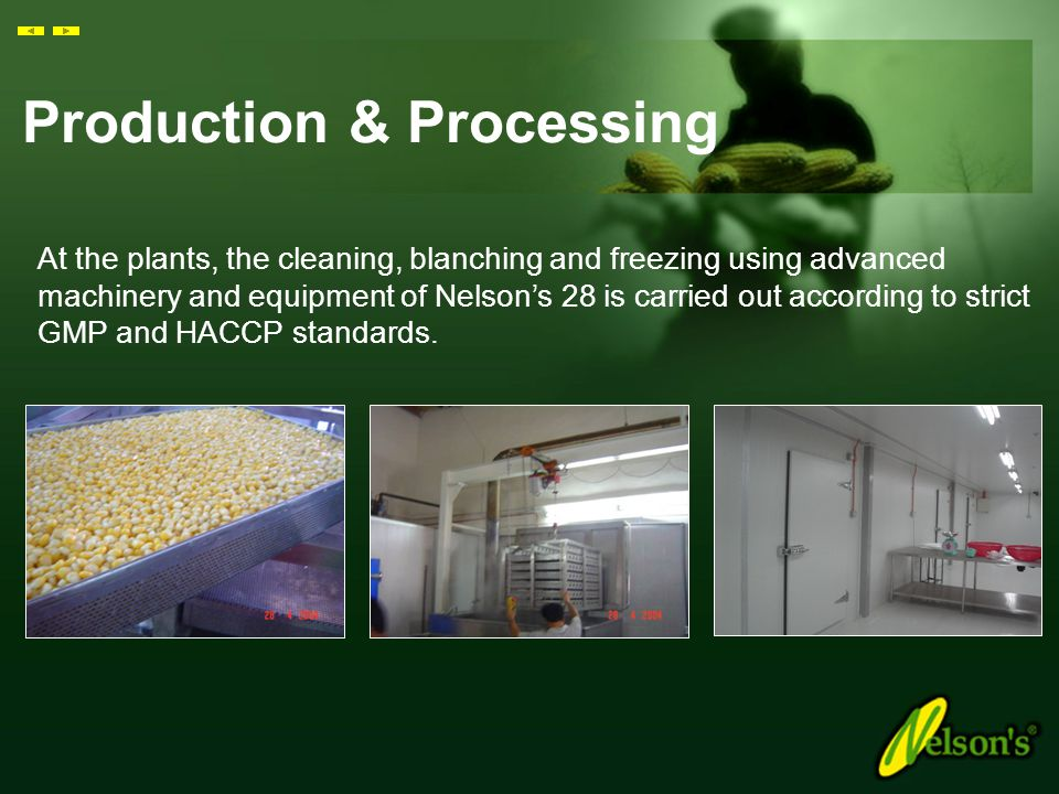 Production & Processing Nelson's 28 is then transported to our processing plants located in Ipoh and Kota Kinabalu.