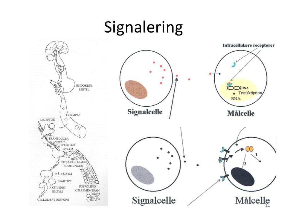 Signalering 11