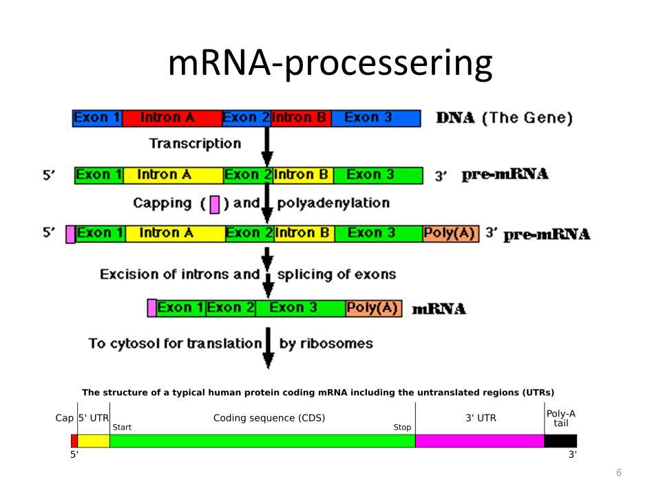 mRNA-processering 6