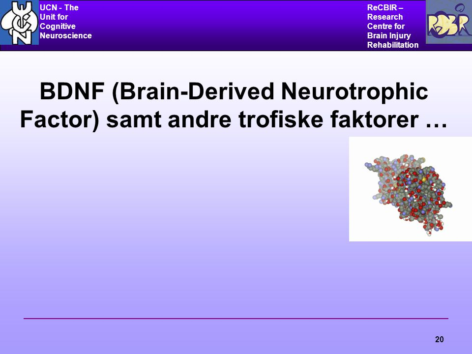 UCN - The Unit for Cognitive Neuroscience ReCBIR – Research Centre for Brain Injury Rehabilitation 20 BDNF (Brain-Derived Neurotrophic Factor) samt andre trofiske faktorer …