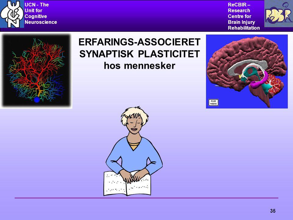 UCN - The Unit for Cognitive Neuroscience ReCBIR – Research Centre for Brain Injury Rehabilitation 35 ERFARINGS-ASSOCIERET SYNAPTISK PLASTICITET hos mennesker