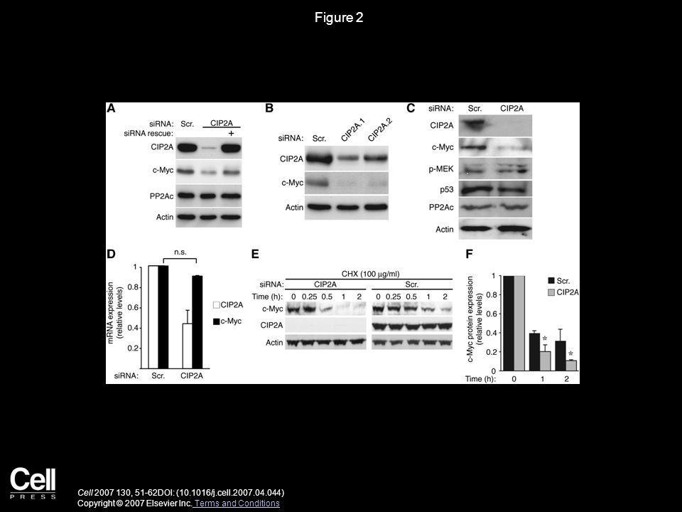 Figure 2 Cell 2007 130, 51-62DOI: (10.1016/j.cell.2007.04.044) Copyright © 2007 Elsevier Inc.