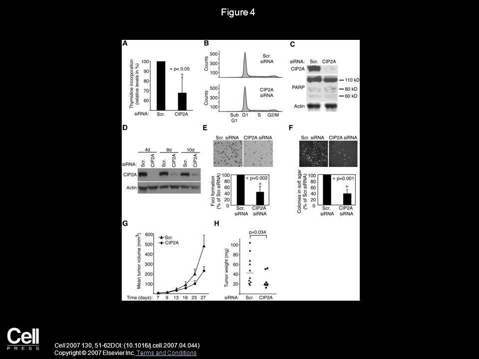 Figure 4 Cell 2007 130, 51-62DOI: (10.1016/j.cell.2007.04.044) Copyright © 2007 Elsevier Inc.