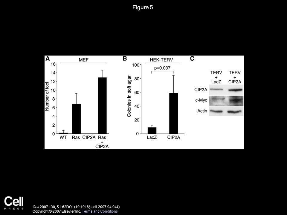 Figure 5 Cell 2007 130, 51-62DOI: (10.1016/j.cell.2007.04.044) Copyright © 2007 Elsevier Inc.
