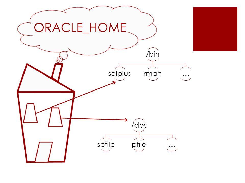 ORACLE_HOME /bin sqlplusrman… /dbs spfilepfile…