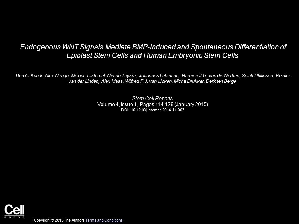 Endogenous WNT Signals Mediate BMP-Induced and Spontaneous Differentiation of Epiblast Stem Cells and Human Embryonic Stem Cells Dorota Kurek, Alex Neagu, Melodi Tastemel, Nesrin Tüysüz, Johannes Lehmann, Harmen J.G.