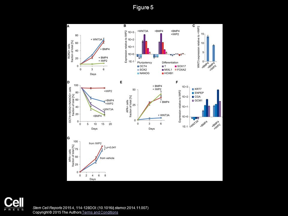 Figure 5 Stem Cell Reports 2015 4, 114-128DOI: (10.1016/j.stemcr.2014.11.007) Copyright © 2015 The Authors Terms and Conditions Terms and Conditions