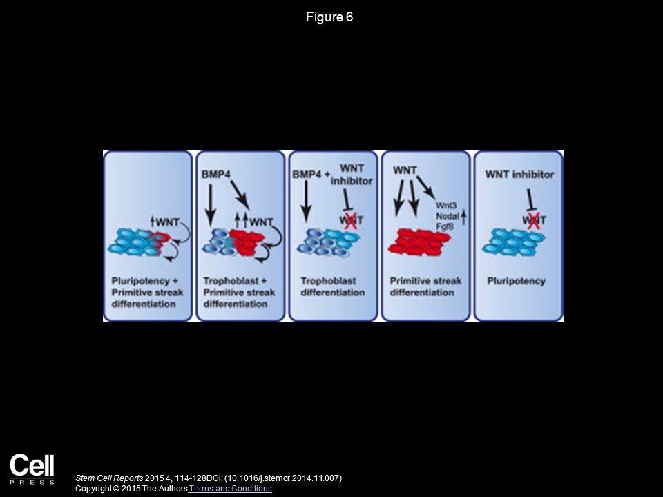 Stem Cell Reports 2015 4, 114-128DOI: (10.1016/j.stemcr.2014.11.007) Copyright © 2015 The Authors Terms and Conditions Terms and Conditions