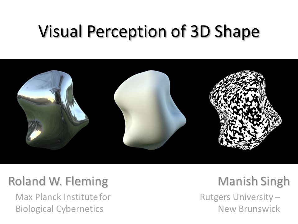 Illusory distortions of shape