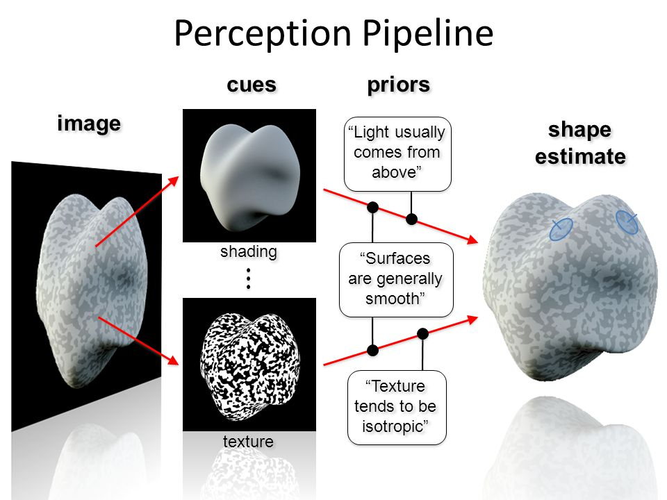 Perception Pipeline cues priors image shading texture shape estimate shape estimate Surfaces are generally smooth Texture tends to be isotropic Light usually comes from above