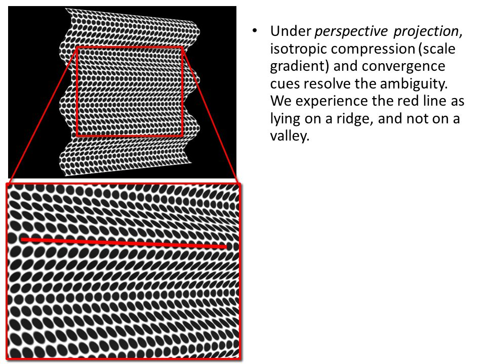 Under perspective projection, isotropic compression (scale gradient) and convergence cues resolve the ambiguity.