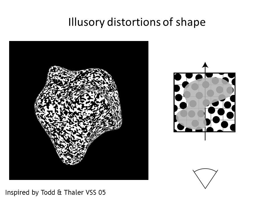 Illusory distortions of shape Inspired by Todd & Thaler VSS 05